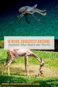 10 Weird, Absolutely Awesome Animals Who Share our World - https://sciencealcove.com/2014/07/weird-animals-share-earth/