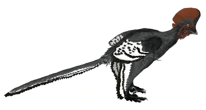 Feathered Dinosaurs Illuminate Evolution of Flight