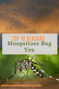 Top 10 Reasons Mosquitoes Bug You-https://sciencealcove.com/2014/07/make-non-toxic-mosquito-trap/