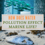 How Water Pollution Effects Marine Life?