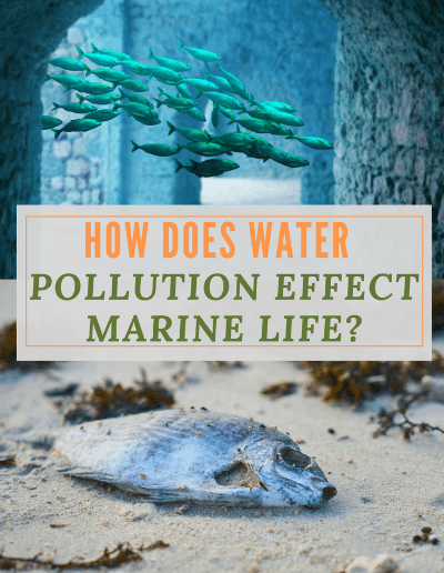How Does Water Pollution Affect Marine Life-https://sciencealcove.com/2014/08/water-pollution-effects-marine-life/