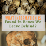 What Information is Found in Bones We Leave Behind?