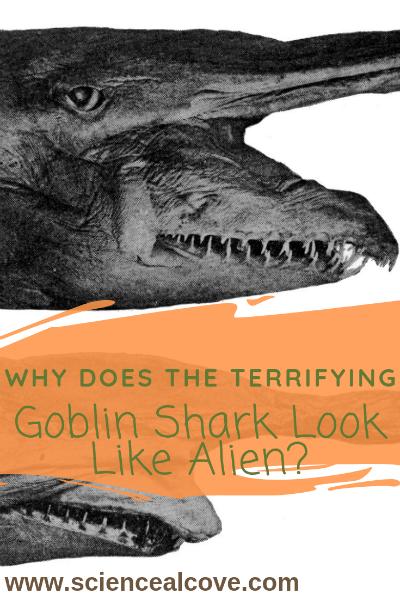 Why does the Terrifying Goblin Shark Look Like Alien?
