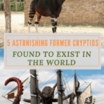 5 Astonishing Former Cryptids Found to Exist in the World