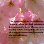 Cherry Blossoms and Japanese Culture