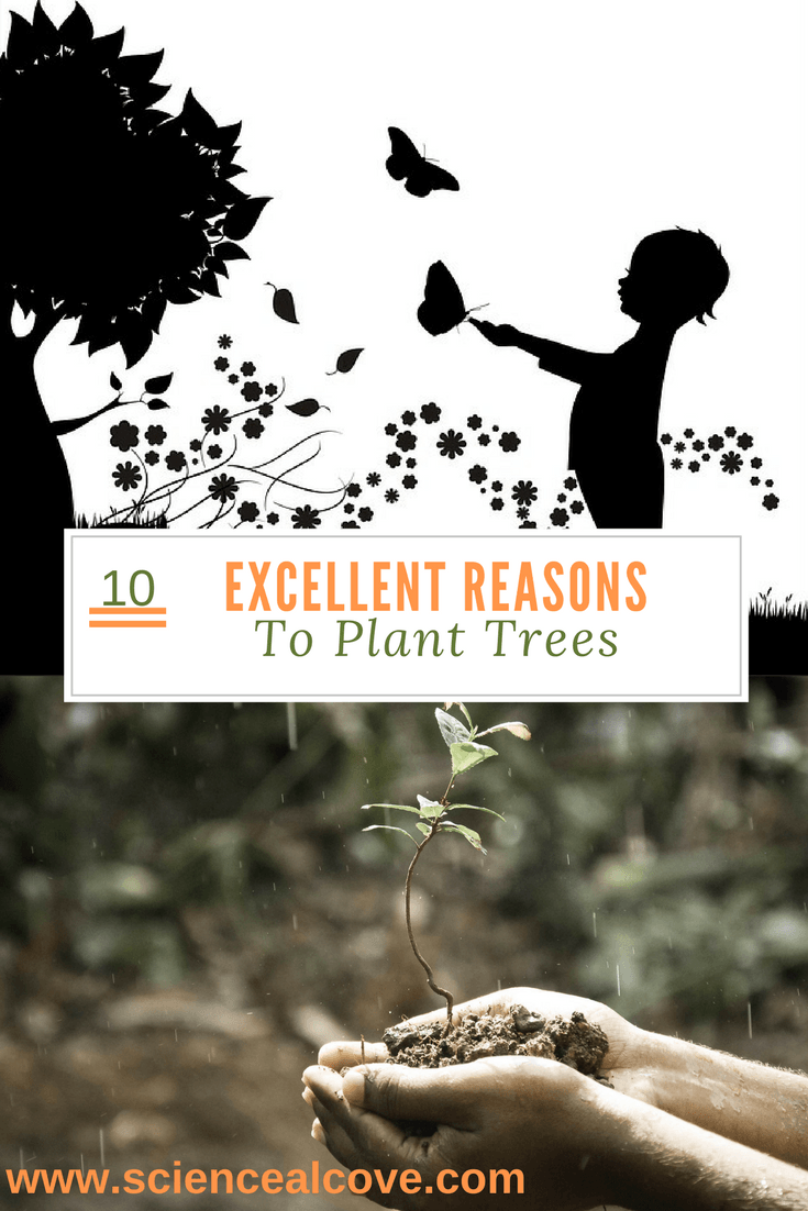 reasons-to-plant-trees