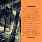 Spiritual Tree Quote by Seneca