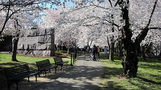 https//upload.wikimedia.org/wikipedia/commons/a/a1/FDR_Memorial_-_cherry_blossoms.jpg