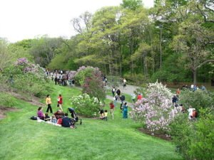 http://upload.wikimedia.org/wikipedia/commons/b/b5/Lilac_Sunday%2C_Arnold_Arboretum%2C_Jamaica_Plain_MA.jpg
