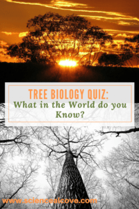 Tree Biology Quiz- What in the World do you Know-https://sciencealcove.com/2015/04/tree-biology-quiz/