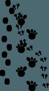 http://pixabay.com/en/footsteps-tracks-footprint-animal-23176/