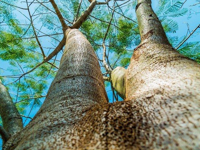 http://pixabay.com/en/log-tree-bark-aesthetic-258817/