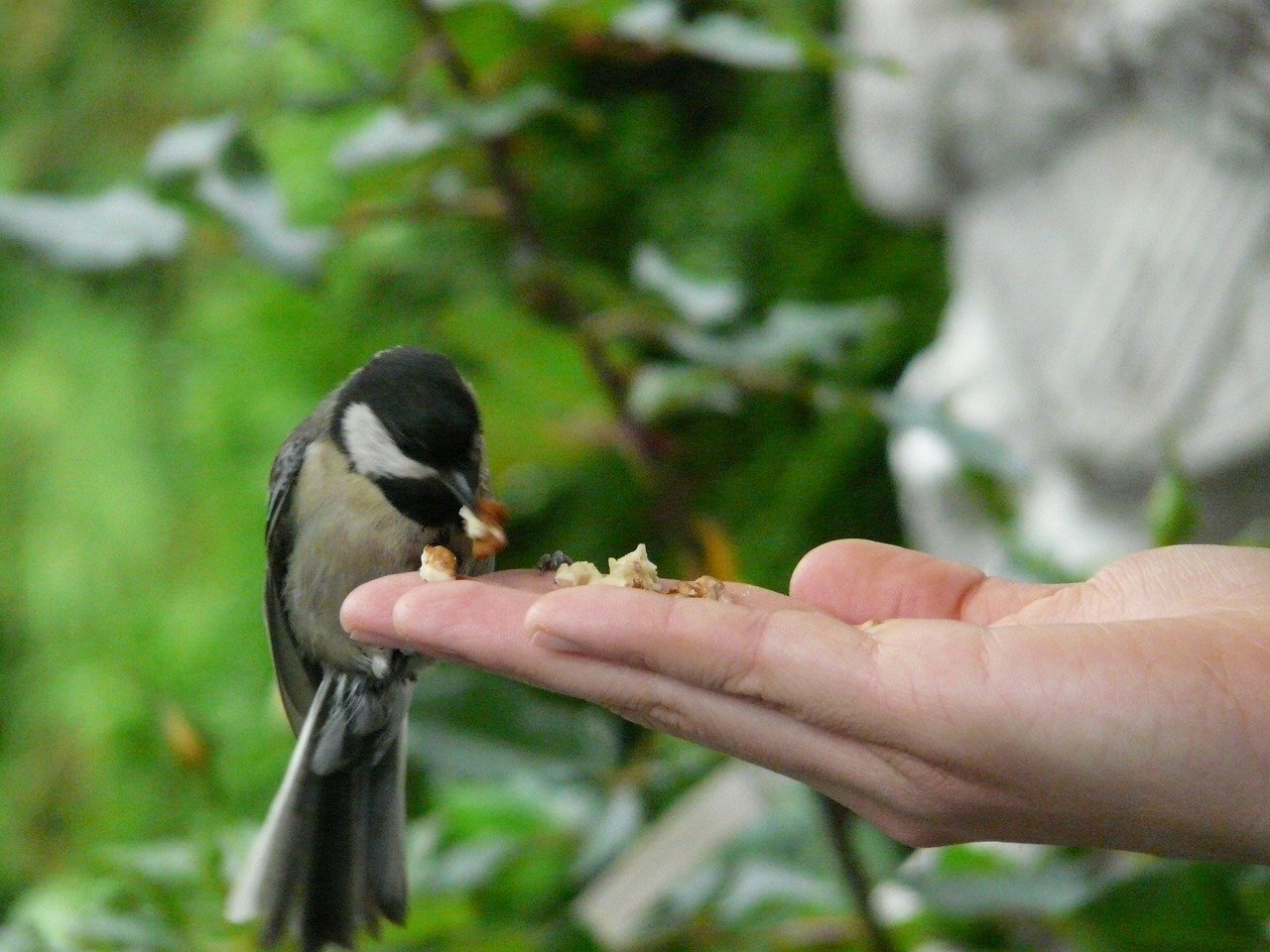 https//pixabay.com/en/tit-bird-hand-food-feeding-58615/