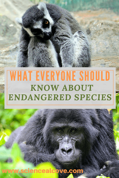 What Everyone Should Know About Endangered Species