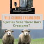 Cloning Endangered Species:  Good or Not?