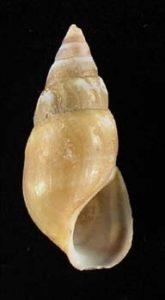 shells of Lake Huron