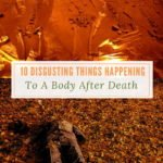 10 Disgusting Things Happening to a Body After Death