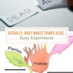 Actually, What Makes Things Alive? :Easy Experiment