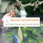 10 Absolutely Excellent Reasons to Feed Amazing Local Birds
