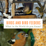 Birds and Bird Feeders: What in the World do You Know?