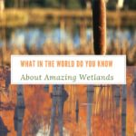 What in the World Do You Know About Amazing Wetlands