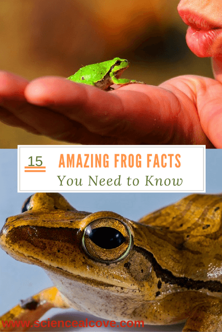 15 Amazing Frog Facts You Need To Know