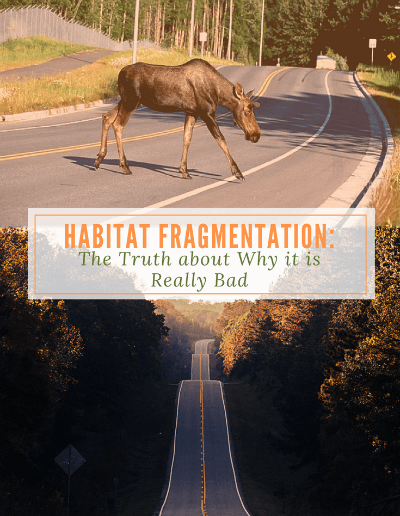 Habitat Fragmentation: The Truth About Why it is Really Bad- https://sciencealcove.com/2017/06/habitat-fragmentation-bad/