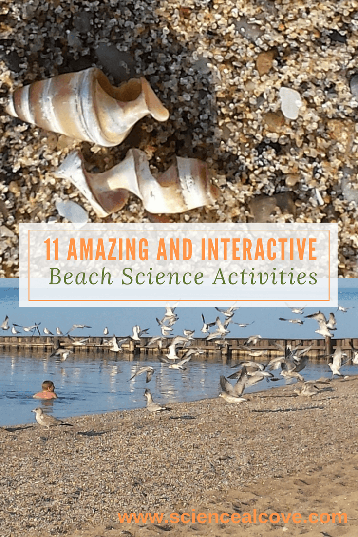 11 Amazing and Interactive Beach Science Activities