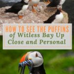 How to See the Puffins of Witless Bay Up Close and Personal