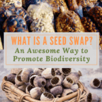 What is a Seed Swap?  An Awesome Way to Promote Biodiversity