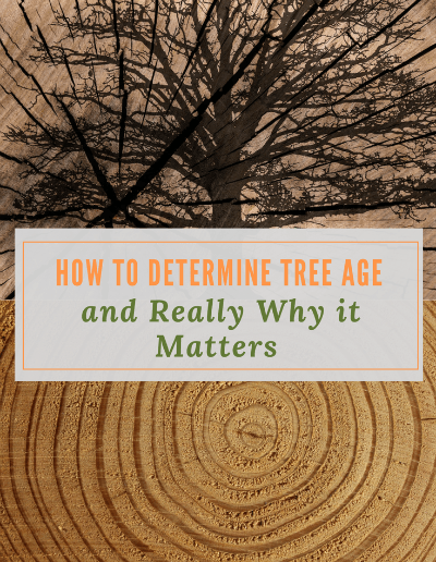 To determine tree age you can use a few methods.  One is simple enough to do as a science activity with kids.  Tree aging can provide a wealth of information.  Examining tree rings can not only age a tree but also provide a lot of interesting historical and climate information. #determiningtreeage #dendrochronology #treescience #science