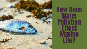 water pollution effect marine life