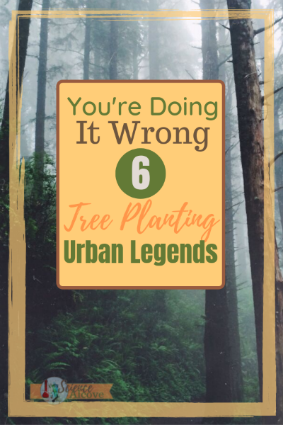 You're Doing It Wrong:  6 Tree Planting Urban Legends